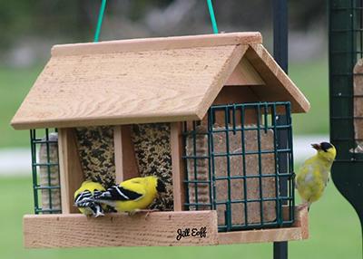 Songbird Essentials SESCS404 Suet Log Bird Feeder